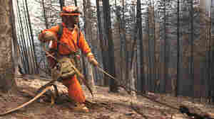 Thousands Of Inmates Serve Time Fighting The West's Forest Fires