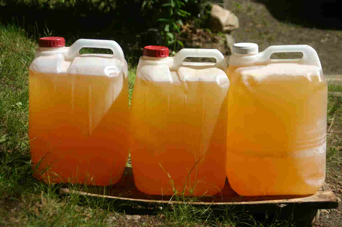 More than 170 volunteers in the Brattleboro, Vt., area have contributed urine to the Rich Earth Institute field trials.