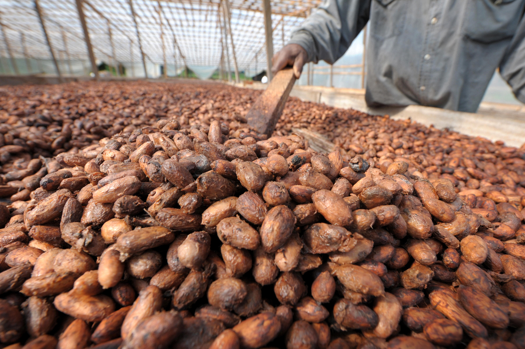 Production of cocoa beans in Ivory Coast 2012/2013-2016/2017