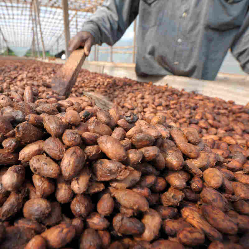 These Ivory Coast Cacao Farmers Had Never Tasted Chocolate
