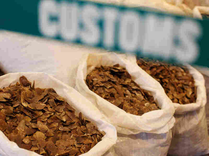 Seized pangolin scales are displayed at a Hong Kong Customs and Excise Department press conference in Kowloon, Hong Kong, China, on June 16.