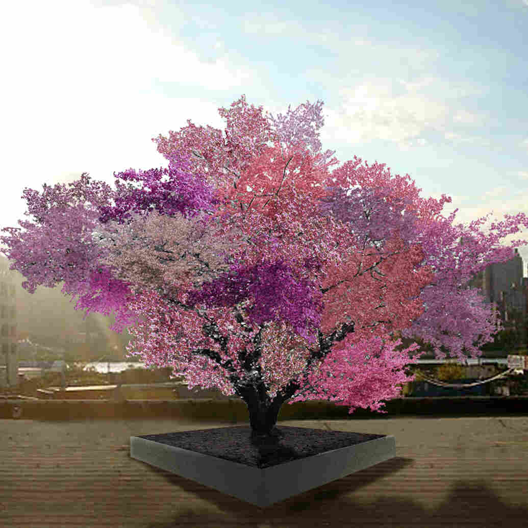 The Gift Of Graft: New York Artist's Tree To Grow 40 Kinds Of Fruit