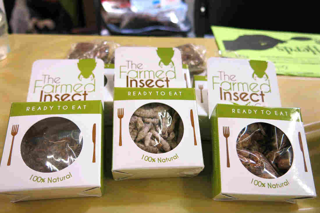 Packages of edible insects lie on a display table at the Denver County Fair.