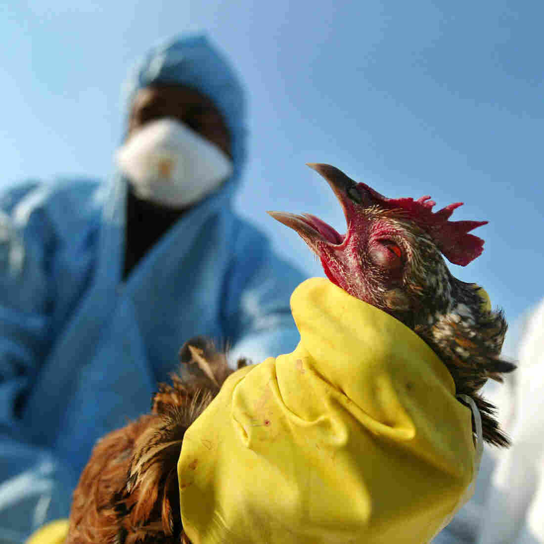 Biologists Choose Sides In Safety Debate Over Lab-Made Pathogens