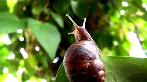 A snail climbing a thing.
