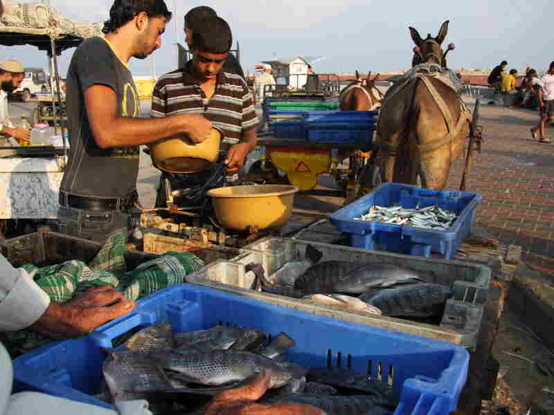 Merchants weigh the morning's catch. Limits Israel puts on Gaza's fishermen make it hard to earn a living, they say.