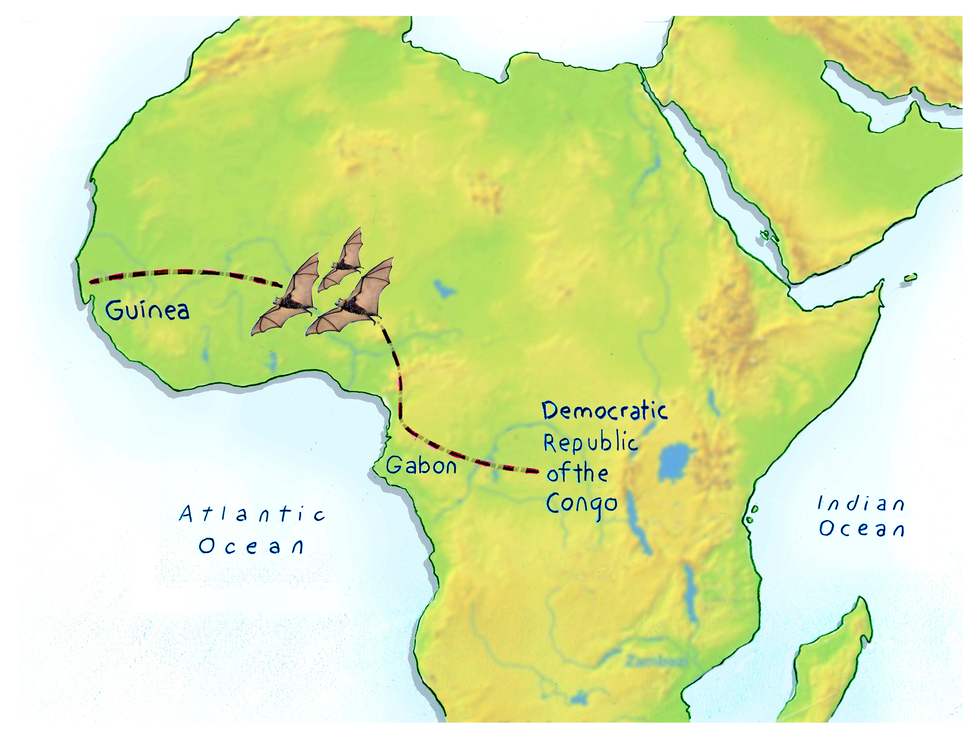 Ebola In The Skies? How The Virus Made It To West Africa