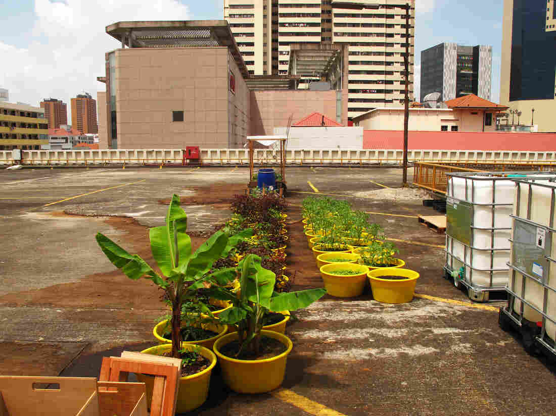 The top floor of the People's Park Complex garage is home to the Edible Gardens showcase — where the company grows herbs, sells supplies, holds classes and presents lectures on urban and sustainable farming techniques.