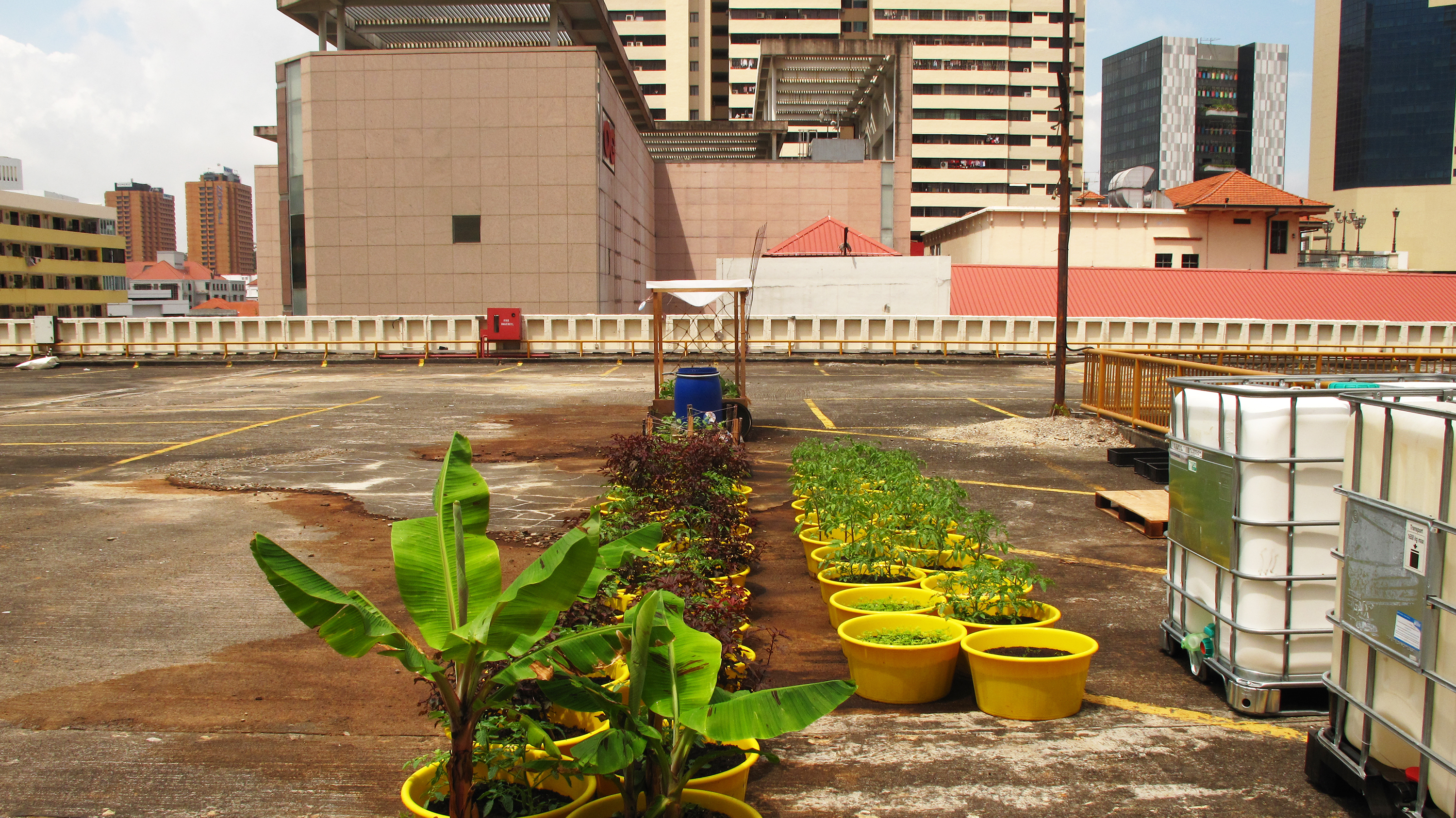The top floor of the People's Park Complex garage is home to the Edible Gardens showcase -- where the company grows herbs, sells supplies, holds classes and presents lectures on urban and sustainable farming techniques.