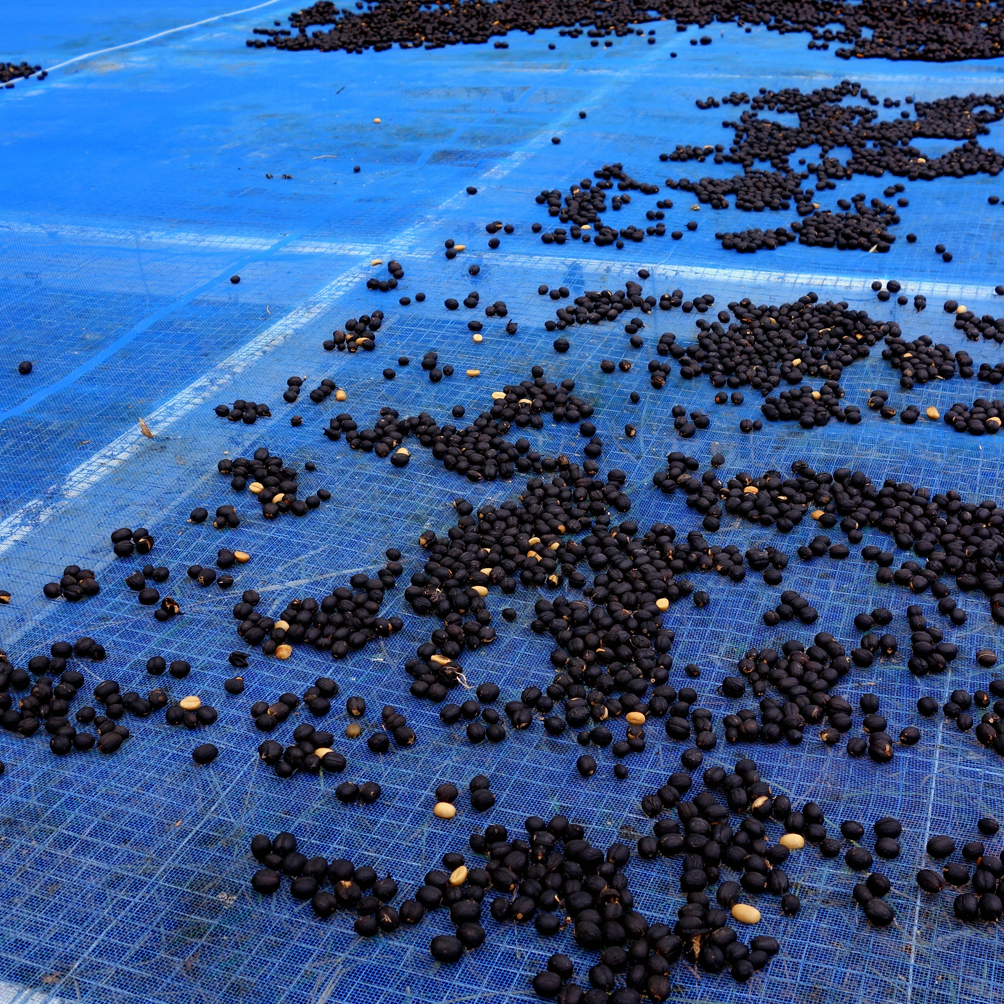 Blake Dinkin sources his Arabica beans from hill tribes in the north of Thailand. The drying process is long and the roasting process is precise.