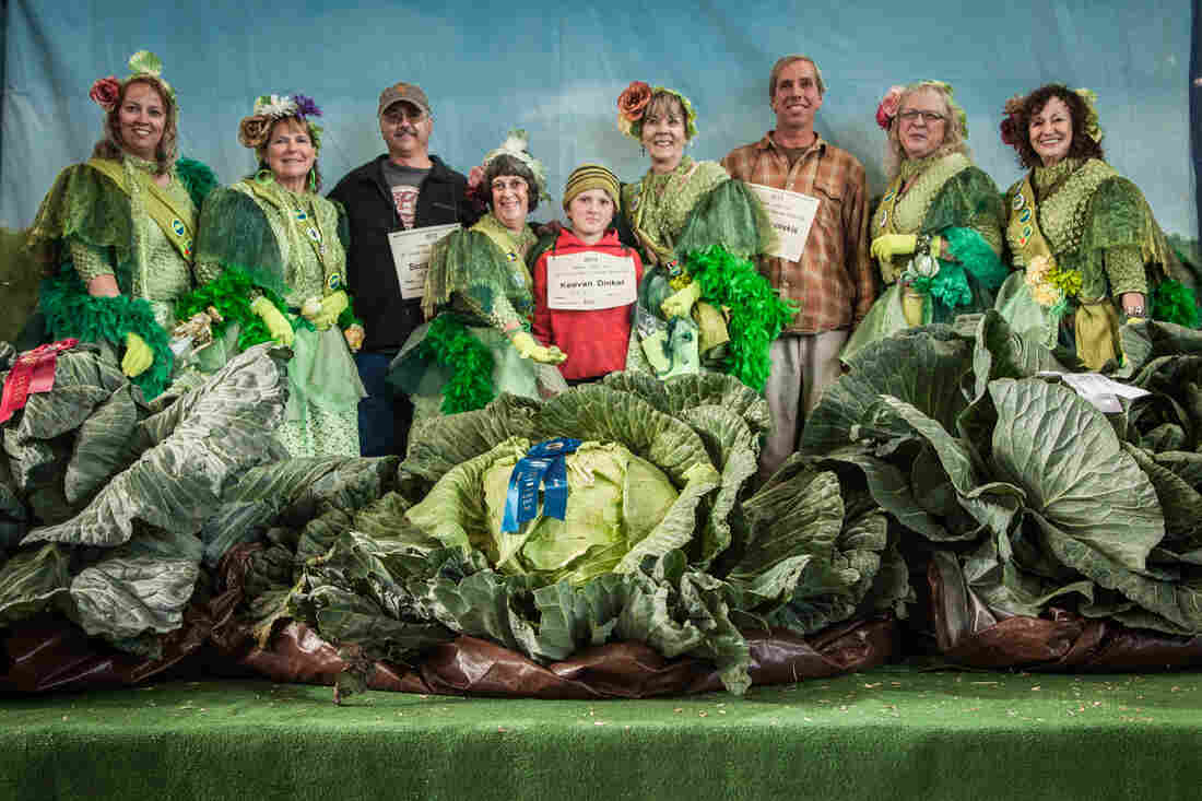 Giant Cabbage Weigh-Off 2013 winners (with placards, left to right): Scott Rob (92.1 pounds), Keevan Dinkel (92.3 pounds) and Brian Shunskis (77.4 pounds). The growers are joined by the cabbage fairies, a group of women who for 15 years have volunteered at the cabbage