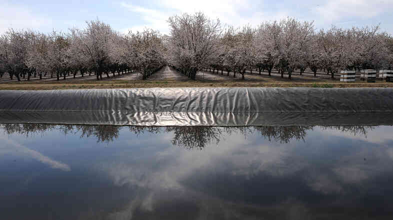 A field of almond trees is reflected in an irrigation canal in Firebaugh, Calif., in the San Joaquin Valley in 2009. The Almond Board of California says that in the past two decades, the industry has reduced its water consumption by 33 percent per pound of almonds produced.