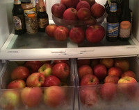 Last September, our refrigerator had two themes: farmer's market apples and beer.