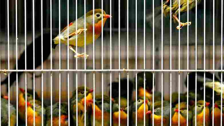 Latino USA Episode #1434 - Caged