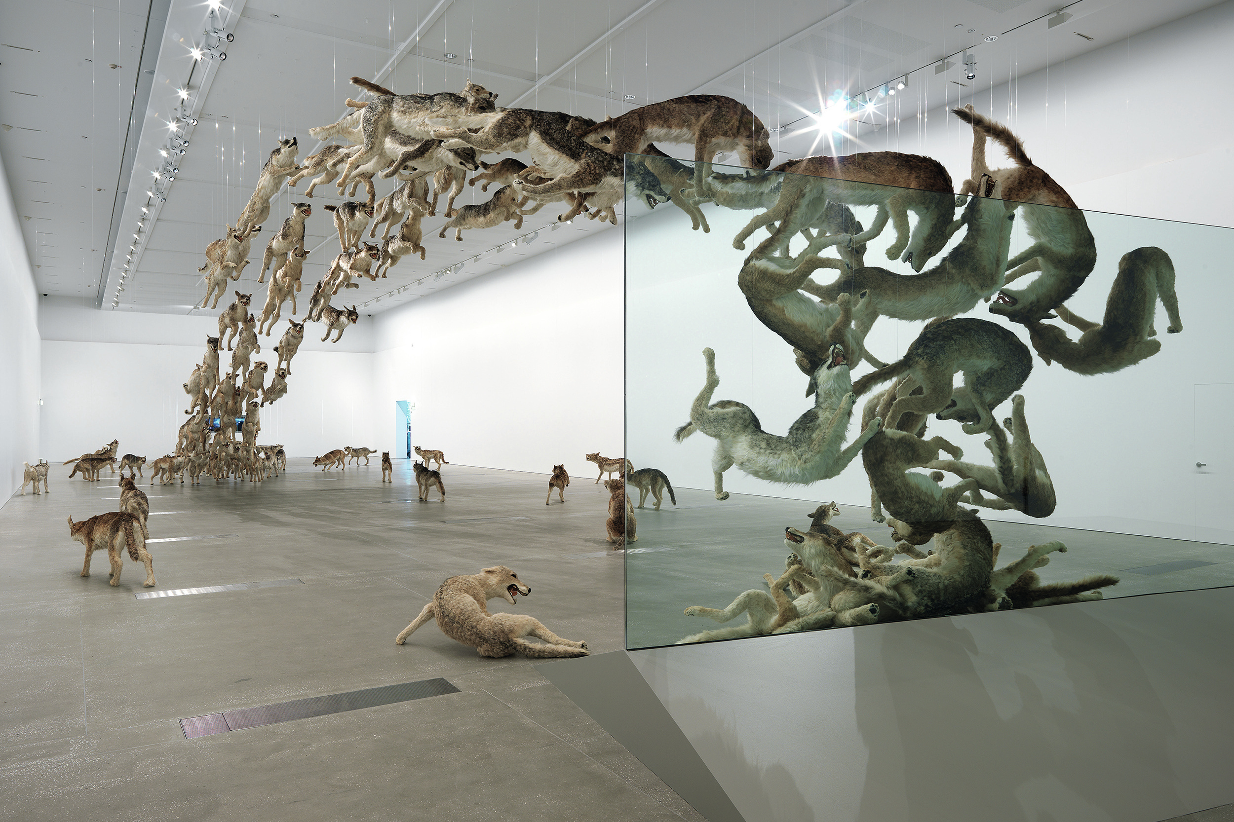 "This installation, ""Head On,"" which debuted in Berlin in 2006, features wolves leaping into a glass wall and speaks to the dangers of ideology and pack mentality. Some visitors also see parallels to China's chaotic political history."