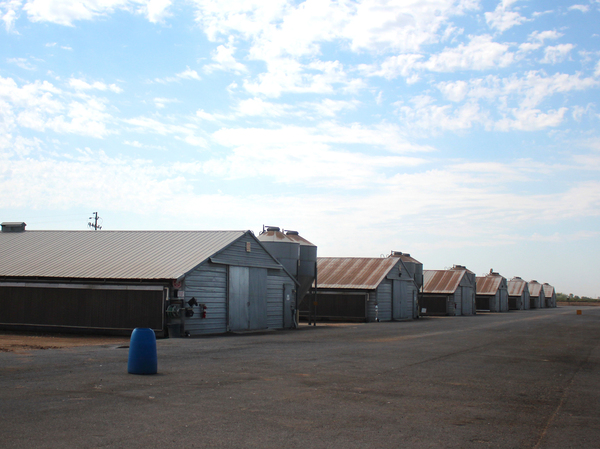 This Foster Farms ranch near Merced, Calif., had higher prevalence for salmonella, so the company started testing everywhere to find it. It turned out the contamination was concentrated inside the houses.