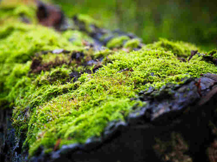 Moss growing on a fallen tree.