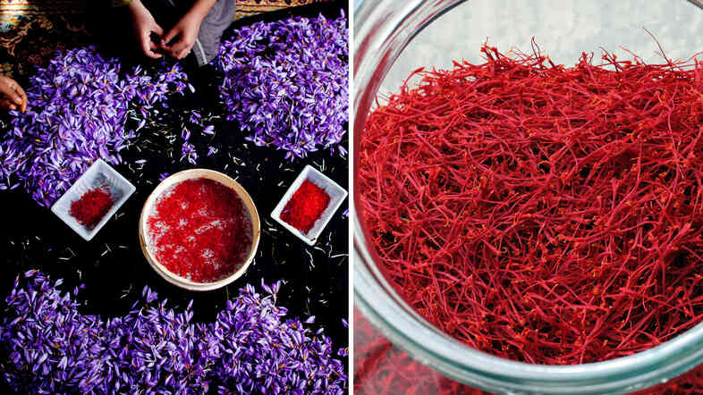 A woman holds the saffron crocus, during the saffron harvest in Herat, Afghanistan (left). Saffron flowers are collected in Saint Hippolyte, eastern France (right). Since the stigmas need to be picked from the flowers by hand, saffron is the world's most expensive spice.