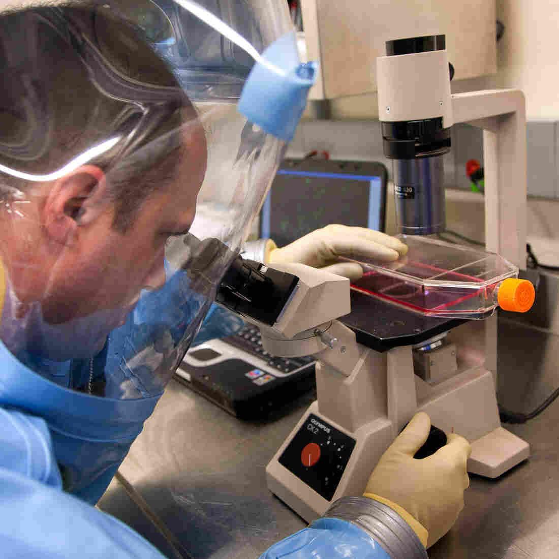 Experimental Drug Saves Monkeys Stricken With Ebola