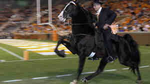 Trainer Jimmy McConnell of  Shelbyville, Tenn., rides champion walking horse Watch It Now before a 2009 football game in Knoxville, Tenn. Celebrations of the breed's distinctive gait are a 75-year-old tradition, but animal rights activists say that for many of those decades, the walking horse industry has abused animals to get their knees even higher.