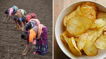 Laborers sow cotton seeds in a field ahead of anticipated monsoon rains in Warangal, India (left). Bowl of potato chips, which are often made with cottonseed oil (right).
