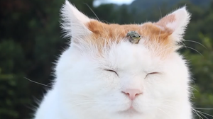 Cat and frog.