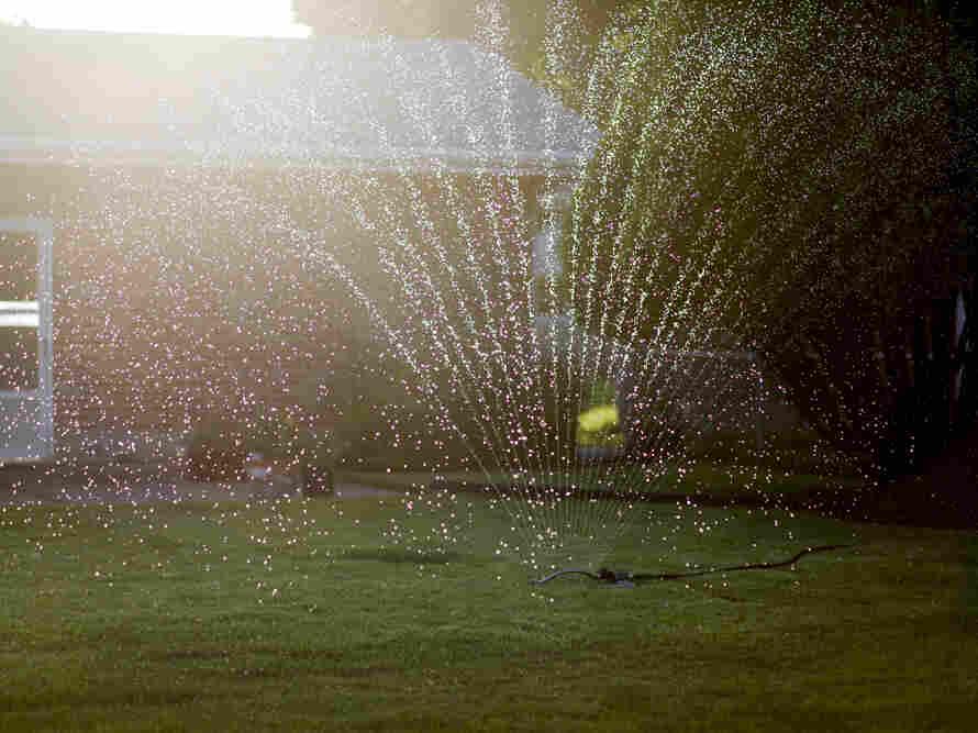 A sprinkler watered a backyard lawn near West Florissant Avenue.