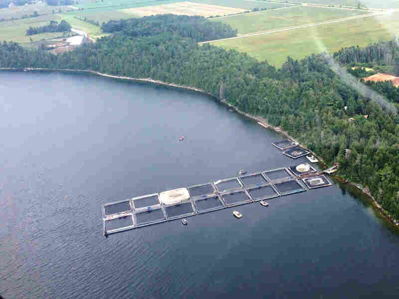 Meeker's Aquaculture in Evansville, Ontario, is one of the commercial fish pens on the Canadian side of Lake Huron, raising mainly rainbow trout.