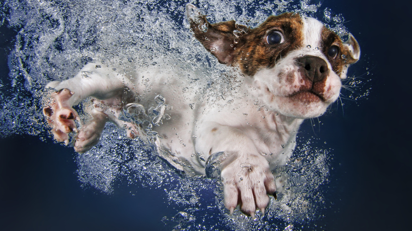 9 Ridiculously Cute Underwater Puppies (You're Welcome)