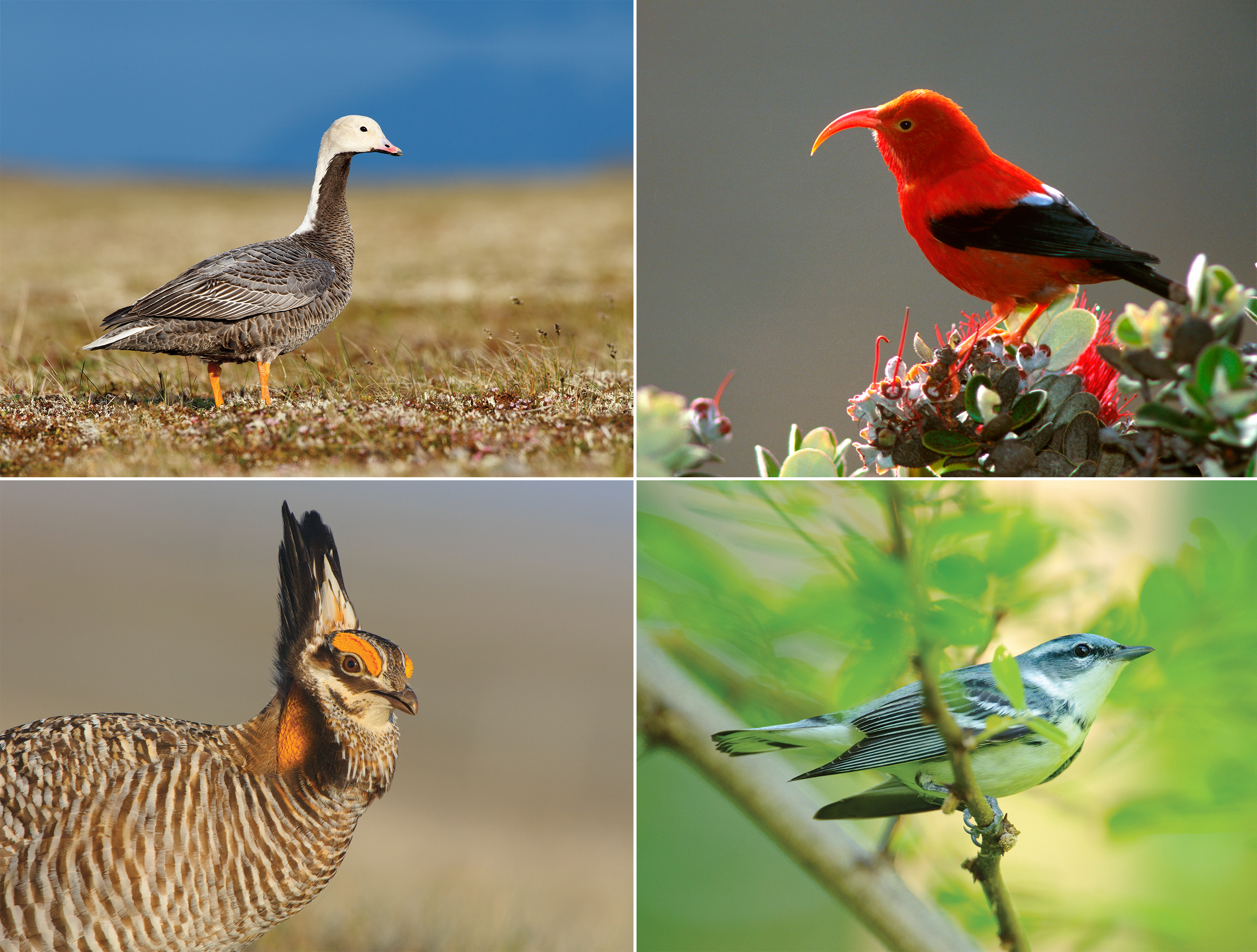 U.S. Gets Middling Marks On 2014 'State Of Birds' Report Card