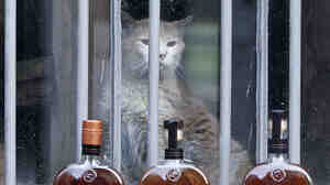 Elijah, the Woodford Reserve Distillery mascot cat in Versailles, Ky., in 2013. He kept the workplace mouse-free for more than 20 years before dying this summer, the distillery said.