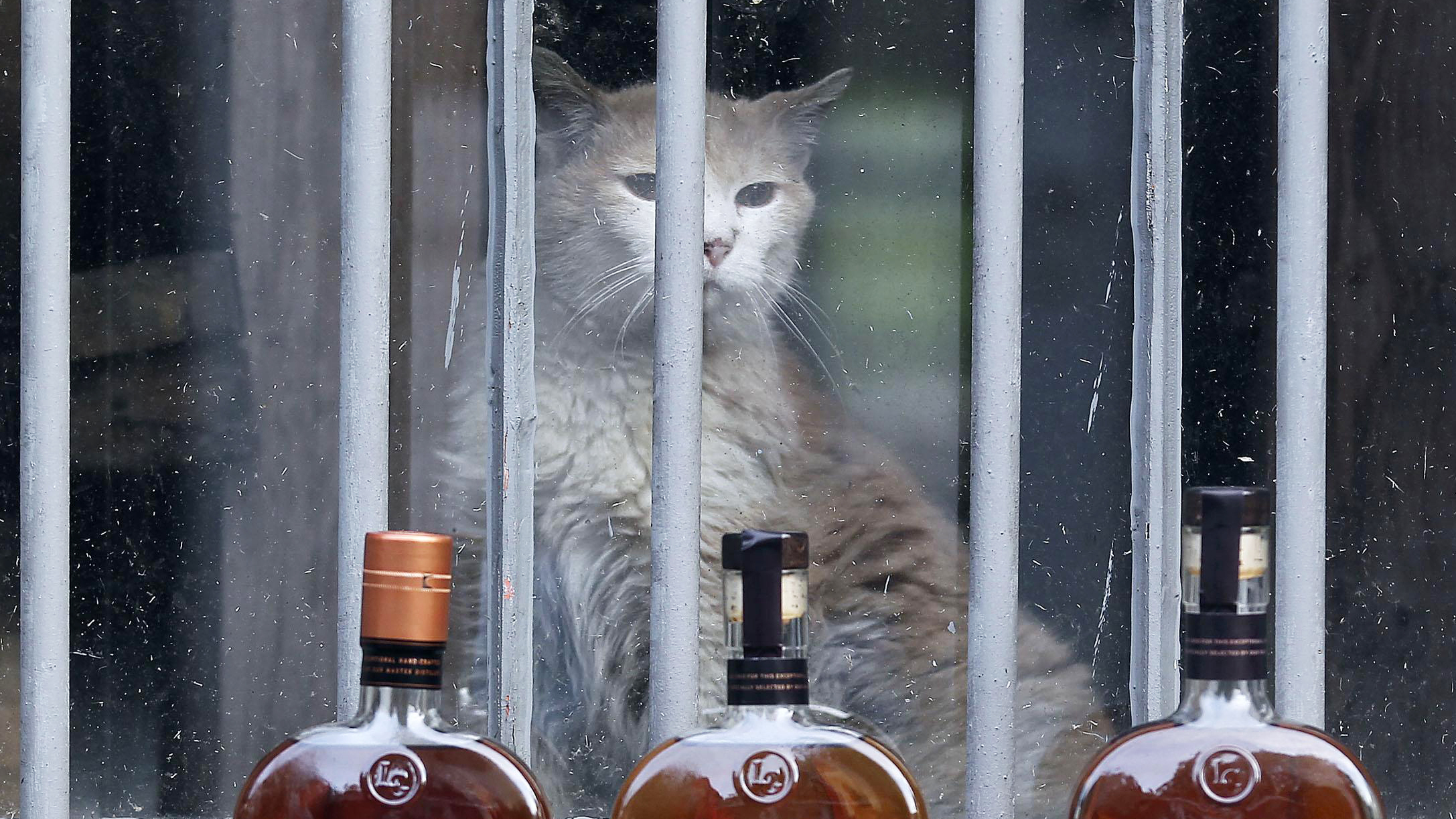 Behind Every Good Whisky Is A Trusty Distillery Cat