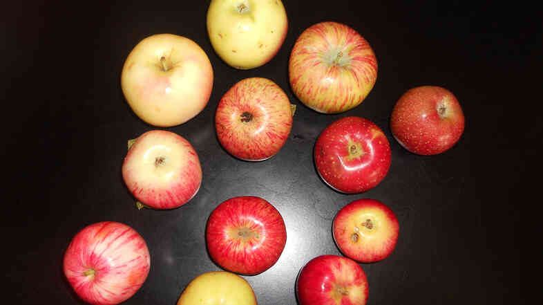 The Maiden Blush, Chenango Strawberry and Duchess of Oldenburg are heirloom apples found in old orchards across Colorado, which was once a major apple-producing state.