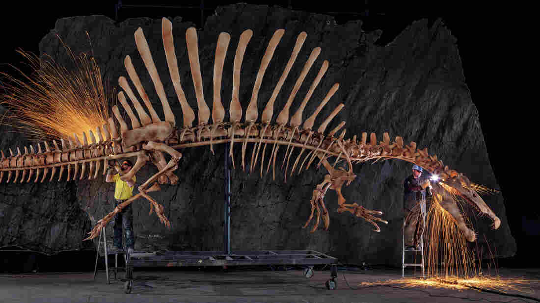 Workers at the National Geographic Museum in Washington grind the rough edges off a life-size replica of a spinosaurus skeleton.