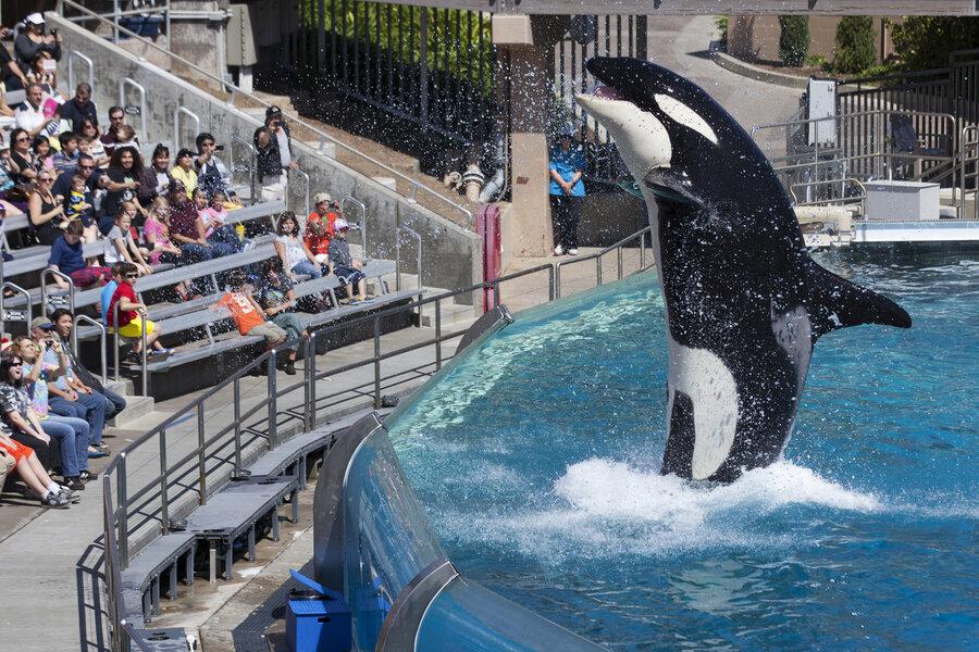 SeaWorld Hopes New Orca Habitats Will Stem A Tide Of Criticism : NPR