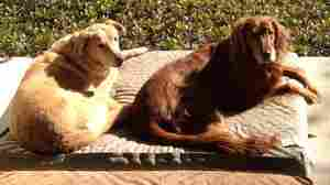 Wade Goodwyn's dogs, Miles and Rosie, greeted James Lee Woodard eagerly.