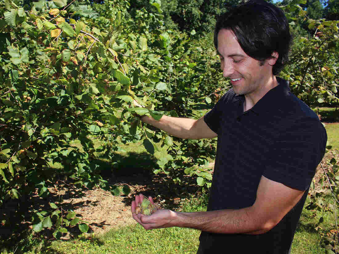 Thomas Molnar, a plant biologist at Rutgers University, is breeding new hazelnut varieties that can resist Eastern Filbert Blight.