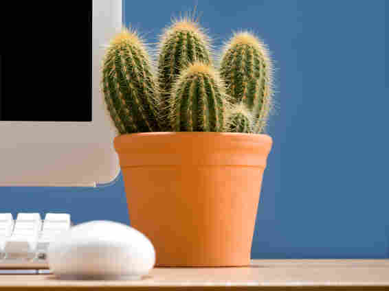 Cactus on a desk.
