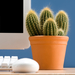 Growing Business — Show Us Your Desk Plant