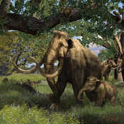 Mammuthus columbi, the Columbian mammoth, used to be common in America, but went extinct about 10,000 years ago. The specimen found south of Dallas is estimated to be 20,000 - 40,000 years old.