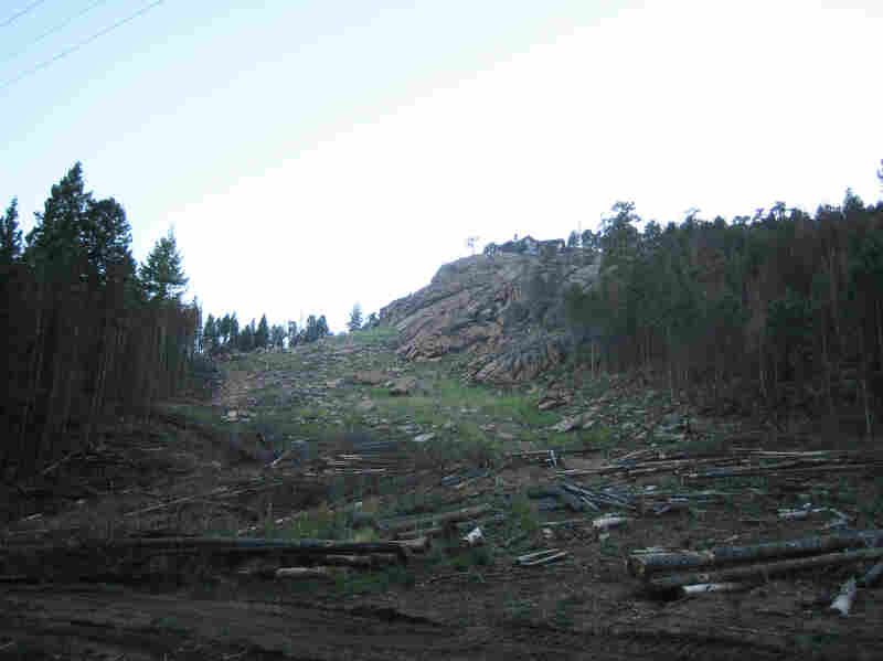 The rock and grass leading up to Judy and Harry Gaylor's neighbor's house, in Evergreen, Colo., used to be covered in trees.