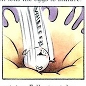 Michael Emberley's illustrations, like this one showing an egg traveling through a fallopian tube, make sexual health information accessible to an elementary and middle school audience. But elements of the art, including naked bodies, make some parents uncomfortable.