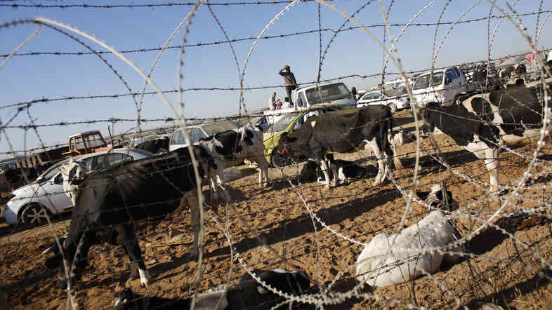 Syrian Kurds with their livestock wait behind a border fence near the southeastern town of Suruc in Sanliurfa province on Monday. Some 100,000 Kurds have fled from Syria into Turkey amid intense fighting between peshmerga forces and ISIS.