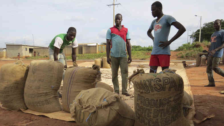 To protect its cocoa workers from Ebola, the Ivory Coast has closed its borders