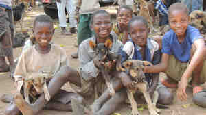 Boys show off their four-legged friends at a rabies vaccination drive set up by the Serengeti Health Initiative in the Bariadi District of Tanzania.