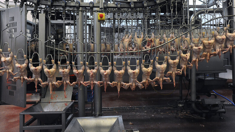 Europeans don't want chlorinated chicken