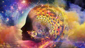 Can Psychedelics Expand Our Consciousness?