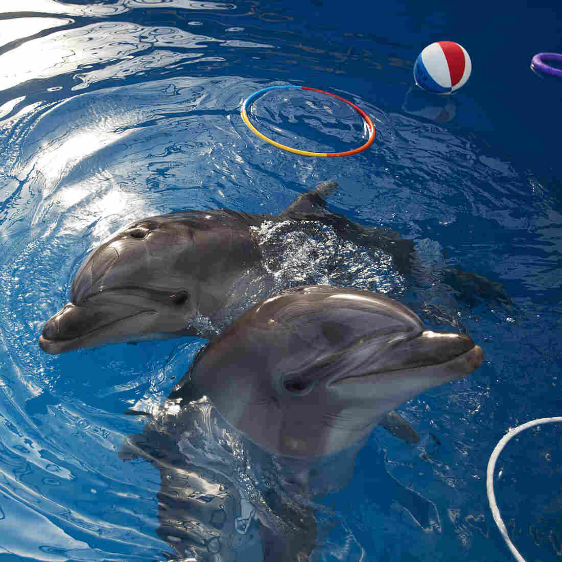 Dolphins: Adorable, Playful, Not As Smart As You Might Think