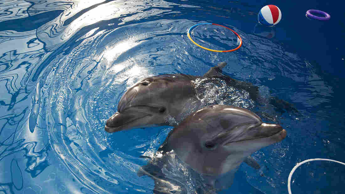 Some researchers have begun to question the notion that dolphins are the super-intelligent creatures they've been made out to be.