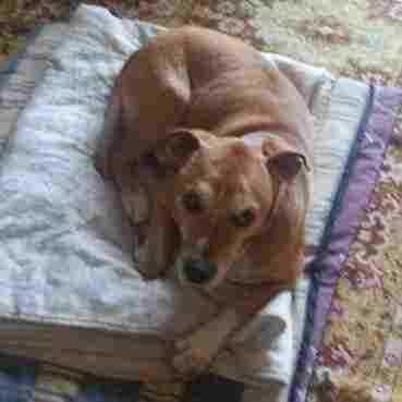 This is an undated image released Wednesday by animal rights organization PACMA of a dog named Excalibur who is owned by Javier Limon and his wife, a nurse who was infected with Ebola in Madrid. Authorities said they planned to euthanize the dog as a precaution.